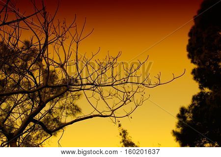 Trees and branches - a different view (high color variation for background usage and more)