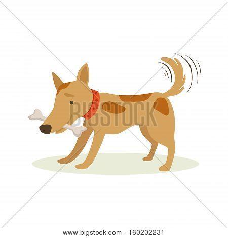 Brown Pet Dog Carrying Bone In Teeth, Animal Emotion Cartoon Illustration. Cute Realistic Active Hound Vector Character Everyday Life Scene Emoji.
