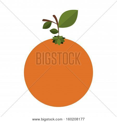 silhouette colorful of orange fruit with stem and leafs vector illustration