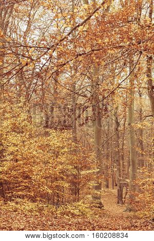 Colours of nature in autumn. Changing landscape of forest. in fall. Vegetation scenery concept.