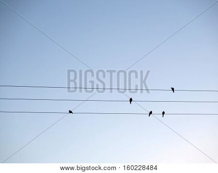 Pigeons sitting on telegraph wires against clear blue sky