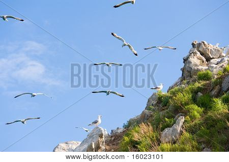 Gull Rookery