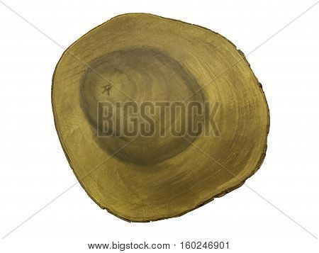 Cross section of tree trunk isolated on white background.