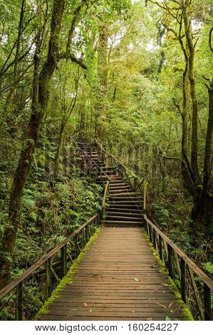 Walkway into the woods, At Doi Inthanon National Park nicknamed