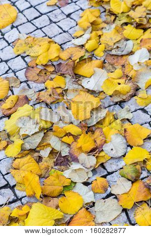 Autumn Street In Lisbon With Yellow Leaves