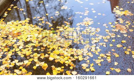Autumn leaves in a puddle. Fall trees. Rich colors.