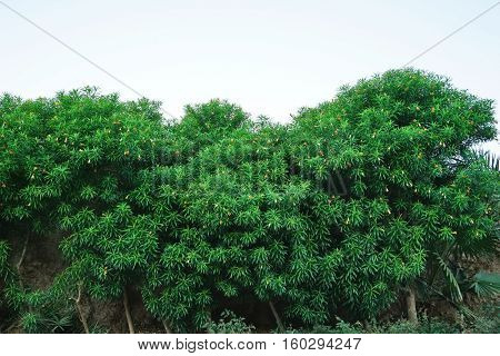 Shrub with beautiful flowers on a sky background