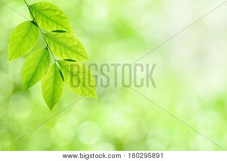 Green nature bokeh background with green leaves