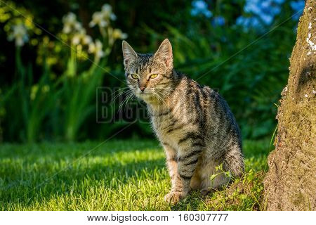 Bored cat is sitting next to the tree in front of green bush with white irises