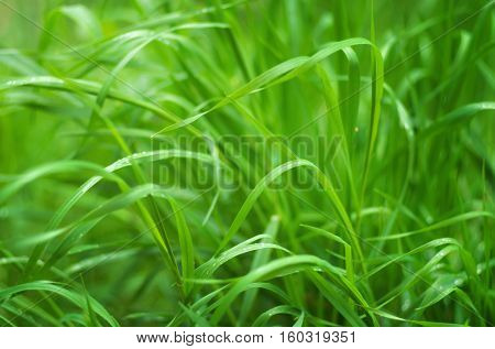 Grass close up nature. Abstract nature composition.