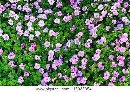 The Purple flowers in the garden , Feeling fresh