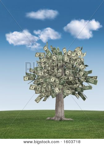 Money Tree & Blue Sky