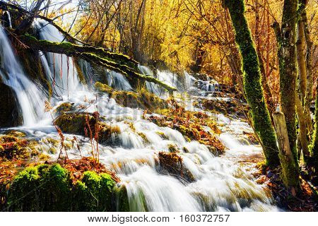 Amazing Waterfall With Crystal Clear Water Among Fall Woods