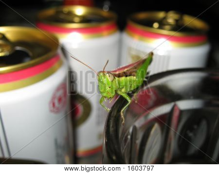 An Inquisitive Grasshopper
