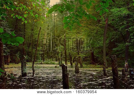 gloomy forest landscape in warm colors with lake and dead trees