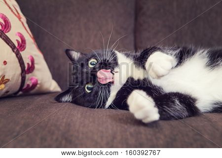 Black and White cat laying on a couch with his tongue out