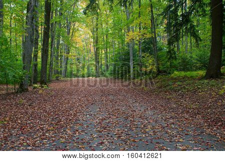 Autumn alley in the Pete's Lake Campground, Hiawatha National Forest, Michigan, USA