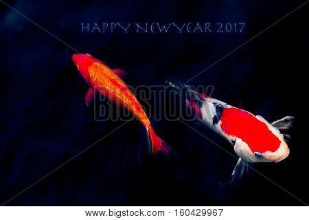 Koi Carp in Koi Pond happy new year