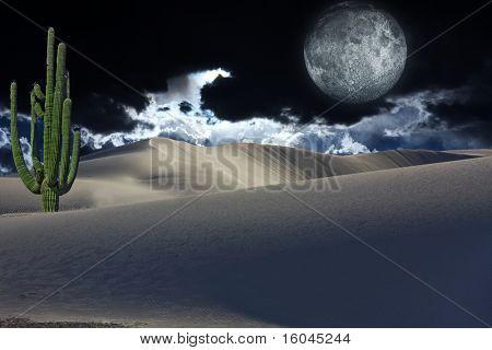 Cactus y Luna del desierto