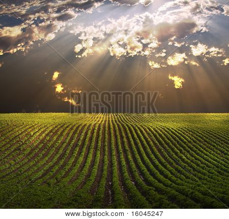 Field in shafts of light