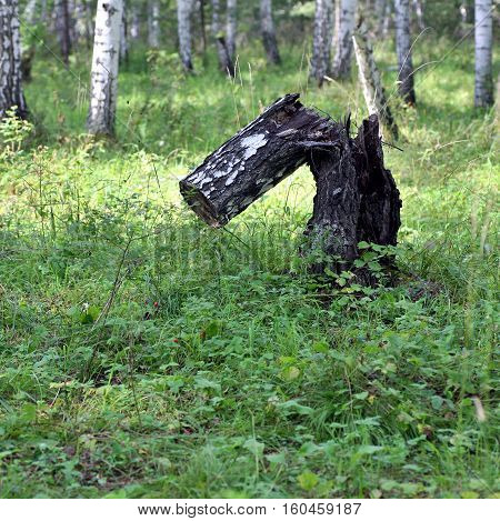 Piece Of Old Wood On Green Grass