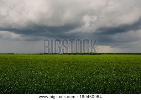 wheat field and clouds in spring countryside