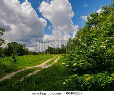 dirt road in the forest spring landscape
