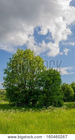 clouds and forest landscape in the countryside in spring
