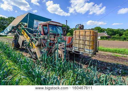 Harvesting of mature leeks with a trailed single row leek harvester with manual cleaning and packing in crates. It is in the end of the spring season.