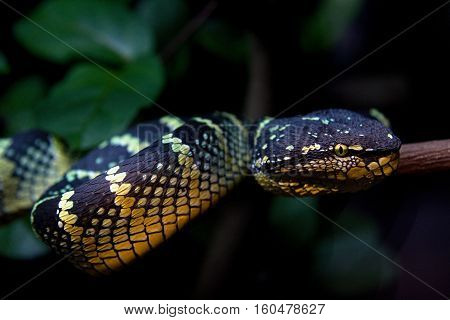 Close up of a beautiful snake on a tree branch with a blurry background of green leaves