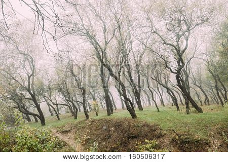 Autumn Misty Deciduous Forest Landscape. Scenic View