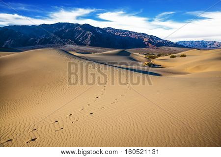 Hot autumn in Death Valley, California. The windy morning in the desert. Gentle ripples on sand dunes