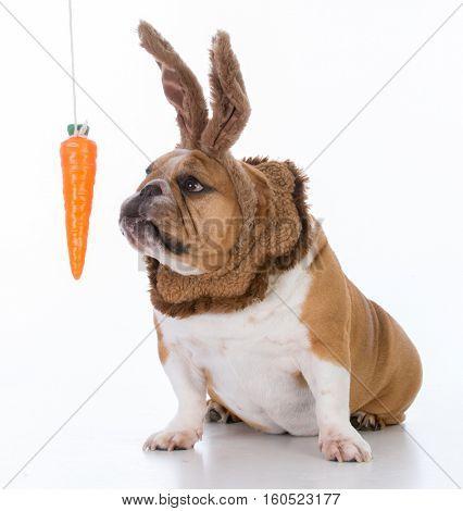 dog dressed like a bunny