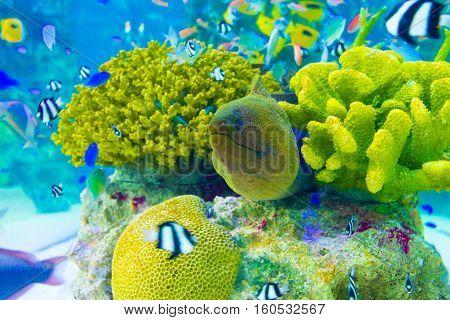 Underwater Moray Eel Coral Reef Aquarium H