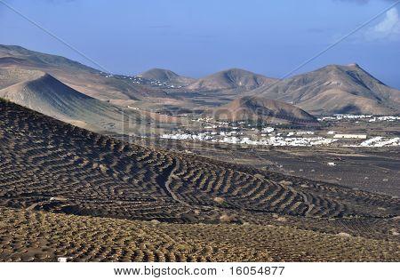 Canary Island Vineyards