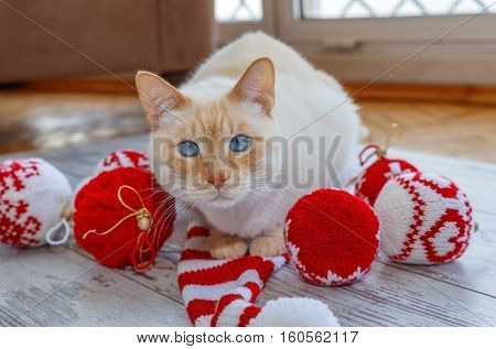 Cat And Christmas Knitted Balls
