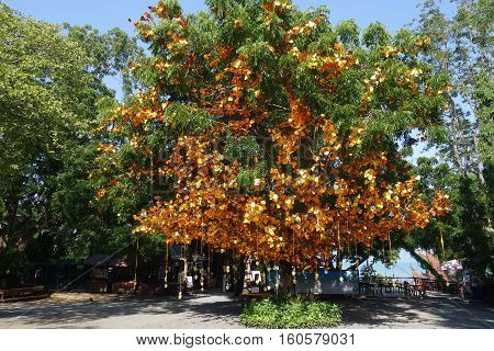 Golden Leaves And Bells Hang On The Tree