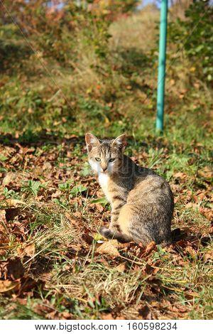 Outdoor Autumn Cat