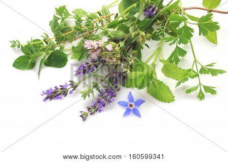 Fresh green and flower herbs - lavender oregano parsley