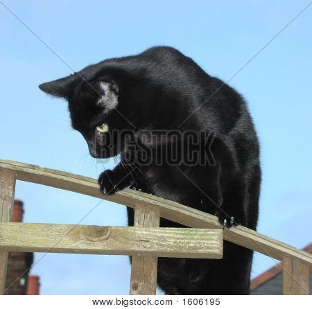Black Cat - Curiosity