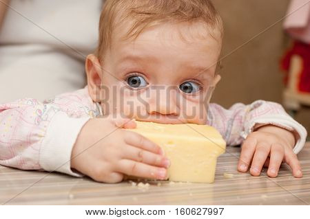 The Baby Eats The Big Piece Of Cheese