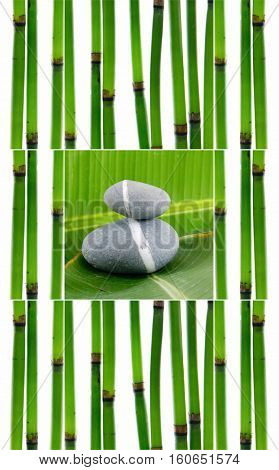 Collage of young bamboo sticks with leaf and gray stones