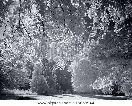 Jardín de verano, fotografiado con una filtro de rayos infrarrojos de la cámara
