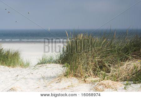 Ver en las holandés dunas cerca de la isla de Terschelling