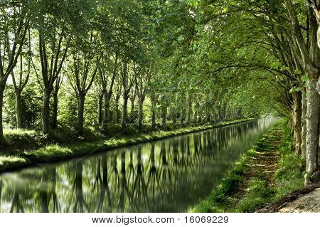 Poplar trees along the canal in France, planted long ago to keep the horses cool that had to pull the barges