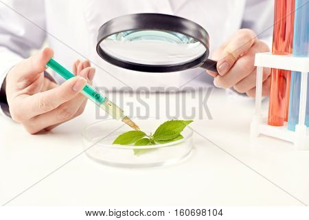 Scientist given injection to a plant in lab