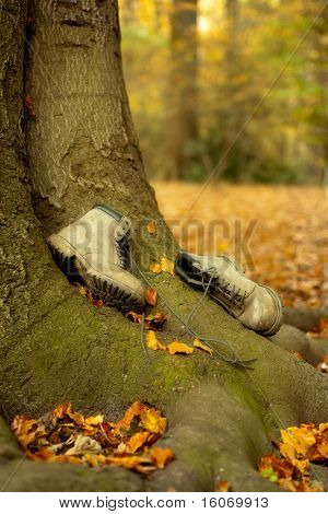 Old worn boots lying on a tree trunk in an autumn forest