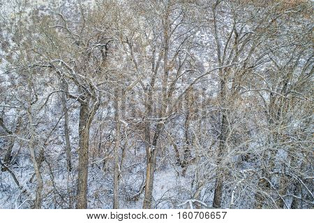 texture of trees and branches covered by fresh snow - aerial view
