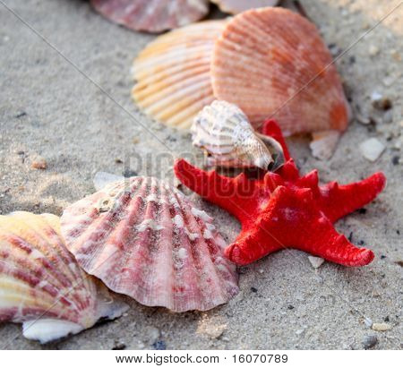 Asteroid and a few seashells on the sand
