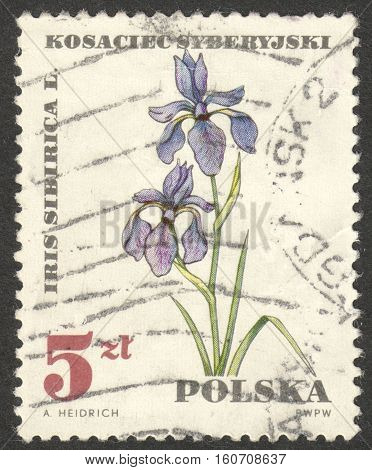 MOSCOW RUSSIA - CIRCA NOVEMBER 2016: a post stamp printed in POLAND shows an Iris sibirica flower the series